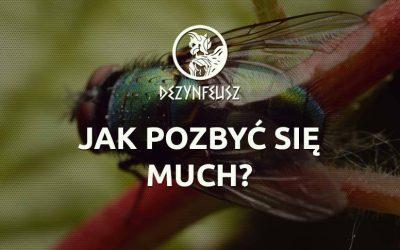 Jak pozbyć się much?